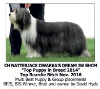 Best Dog Shampoo for Bearded Collie Crufts Champion BOB